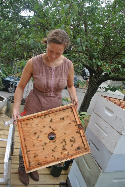 Melissa is an expert with her bees
